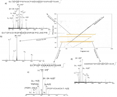 A 2DMS spectrum