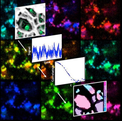 Diagrams and images of the paths fluorescent particles take as they diffuse through a porous nanoscale structure